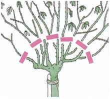 planten snoeien herfst